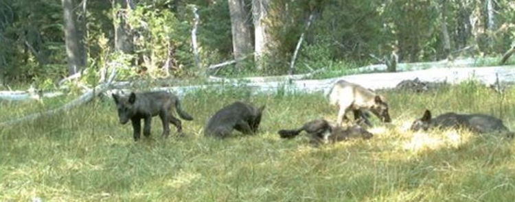150829WolfPack980x386